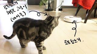 로봇청소기와 고양이(feat. 마이클 브이로그)