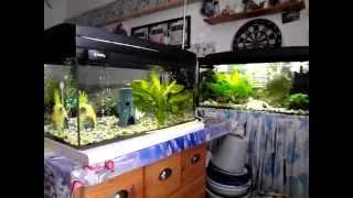 Aquarium mit Skalare , Neons , Platies + Aufzuchtbecken mit Platies und Welse !