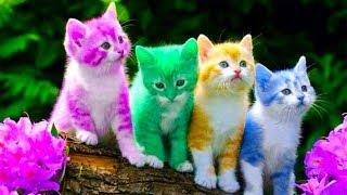 Meo Meo Meo Rửa Mặt Như Mèo 💙Nhạc Thiếu Nhi Mèo Con Cho Bé