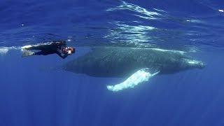 Humpback Whales | JONATHAN BIRD'S BLUE WORLD
