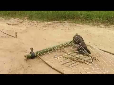 شاهد كيف صنع شبكة لصيد الحمام البرى Youtube