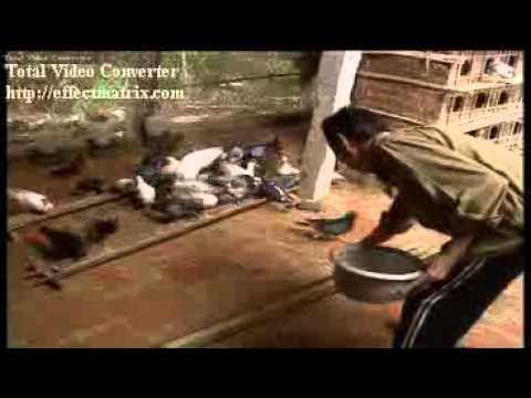 mô hình nuôi chim bồ câu pháp dân quyền triệu sơn thanh hóa(ông lê Văn Thành)