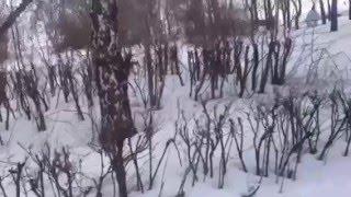 Басенджи Венди гуляет в парке . Basenji walks in the park