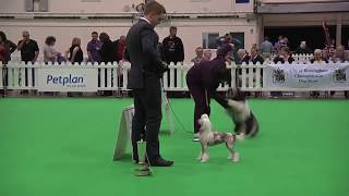 ON THIS DAY 2010: Nora wins Best in Show at City of Birmingham