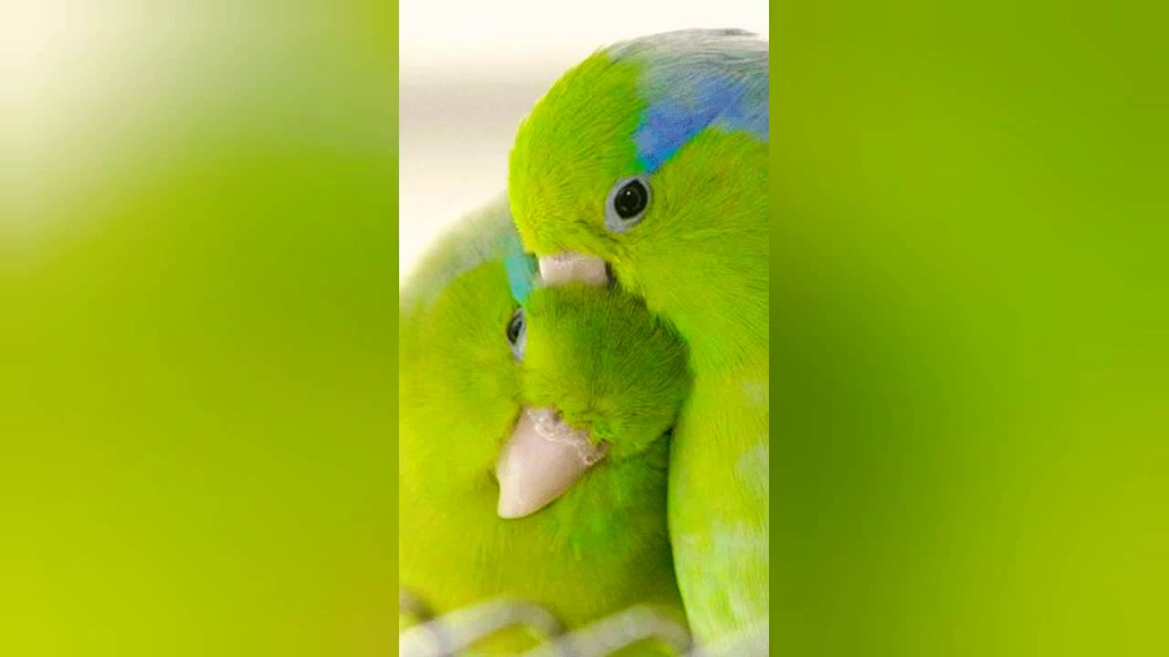 Love Bird Gallery Youtube