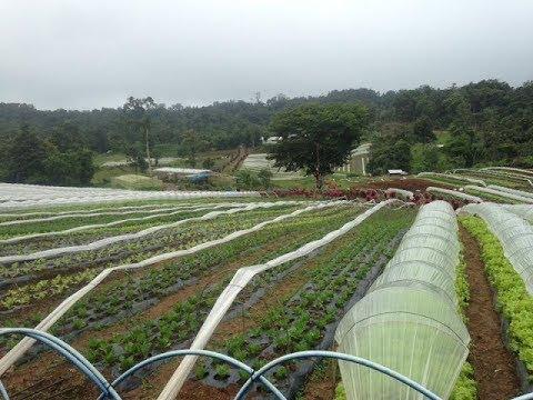 Bemwa Farm - Marilog District, Davao City