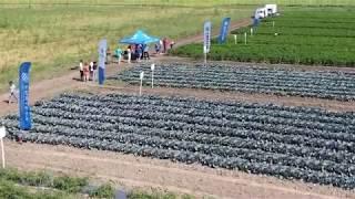 Открит ден на CORTEVA AGRISCIENCE™ в Чешнегирово - новости в зеленчукопроизводството