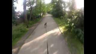 LL Zara bike jöring vers PW à 36km/h