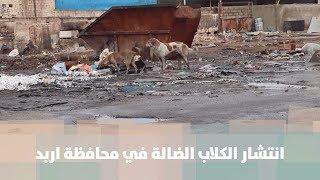انتشار الكلاب الضالة في محافظة اربد - هنا وهناك