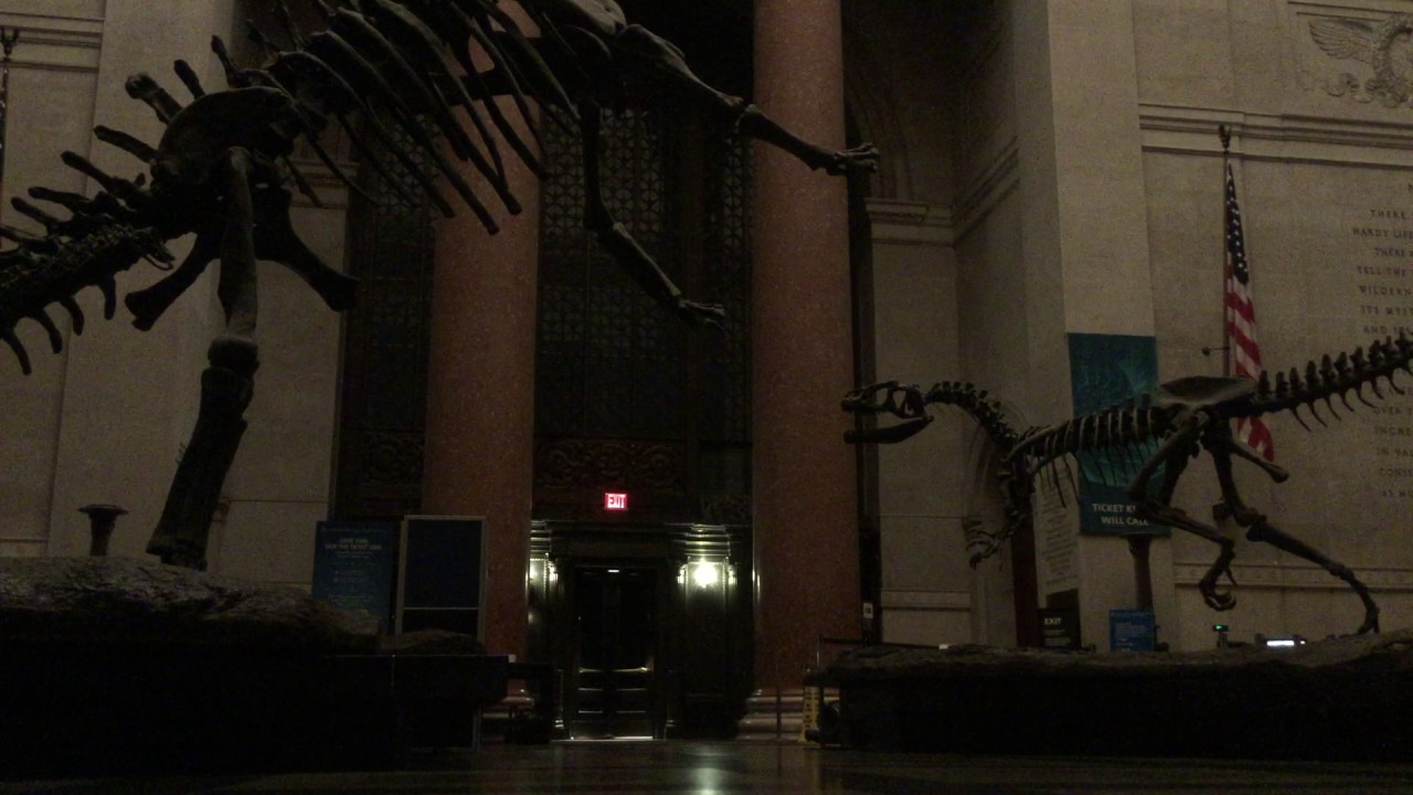 The Real Night at the Museum, American Museum of Natural ...