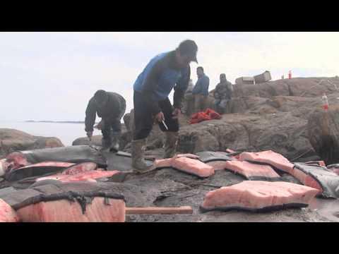 APTN - Bowhead Whale Hunt