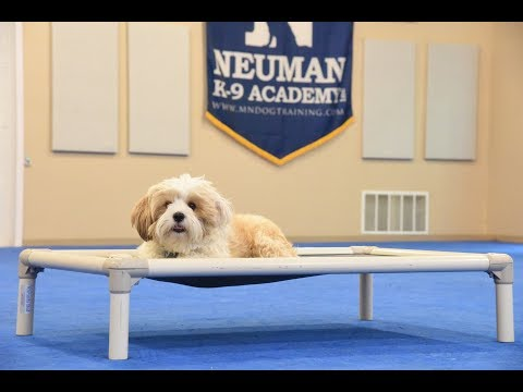 Gracie (Tibetan Terrier) Boot Camp Dog Training Demonstration