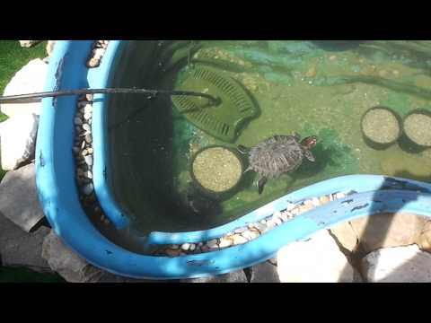 Tortuguera estanque casera de exterior para dos tortuga for Filtro para estanque de tortugas