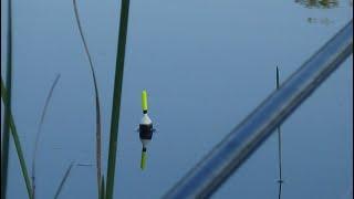 КАРАСИ КАК КАРПЫ ГНУТ УДОЧКУ! ЗАБРАЛИСЬ В РЕАЛЬНУЮ ДИЧЬ! Рыбалка на поплавок в июле