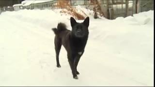 Штрафы за собак без поводка и намордника