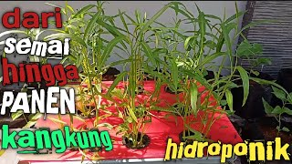 Kangkung Hidroponik: dari Semai sampai Panen
