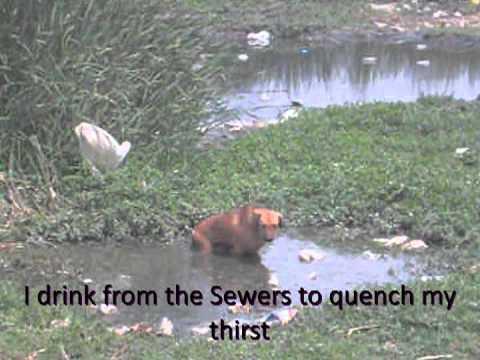 Видео Stray animals solutions essay