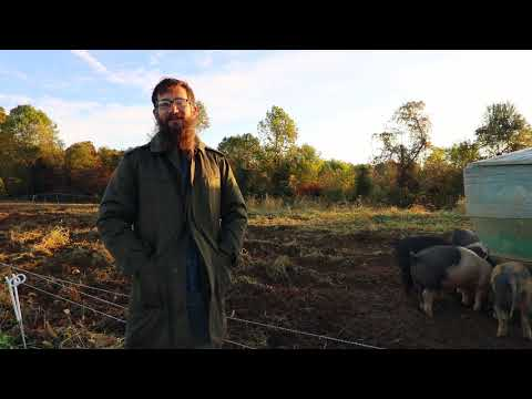Free Range Pigs - Raising Pigs in the Woods and On Pasture