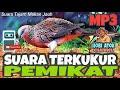 Suara Terkukur Pemikat Tajam Makan Jauh Hobi Atok  Mp3 - Mp4 Download