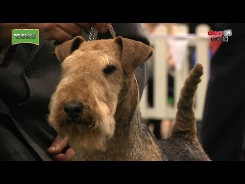 National Terrier 2017 - Best in Show Highlights