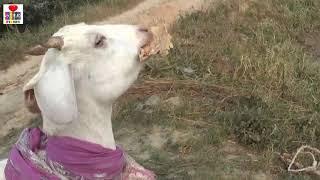#Nun roti khayenge #jinigi #sangahibitayenge #thik khesari new holi-song2021 holi 2021khesari lal