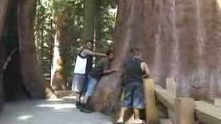 Explring by The General Sherman Tree