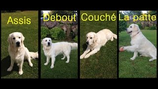 Tuto dressage 01 - Assis, Debout, Couché, La patte