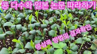 서리태콩 다수확 위한 삽목 결과및 삽목방법~~ 서리테 …