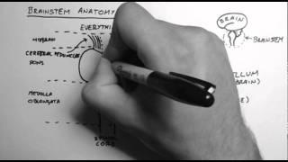 Brainstem Anatomy 1 - Midsagittal Section