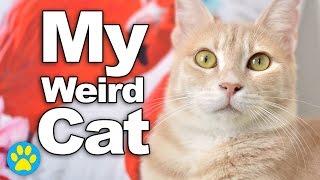 My Cat's Weird Habits