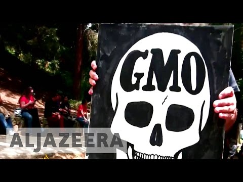 Does the anti-GMO foods movement go against science? - TechKnow