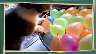 Кошки играют с шарами