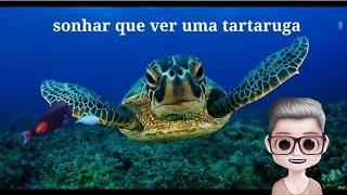 Sonhar com tartaruga ou jabuti todos significado dos sonhos