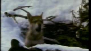 Colmillo blanco (1991) - White Fang Trailer