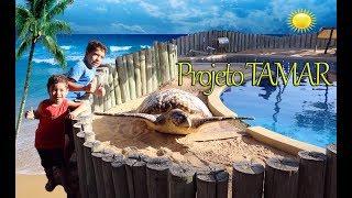 Visita ao PROJETO TAMAR | Tartaruga Marinha, Tubarão, Peixes, Arraias