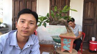 Một số cây mai bonsai giá rẻ