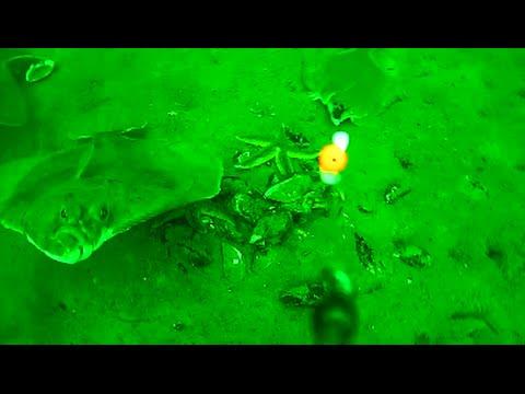 Plattfischangeln auf Scholle und Flunder - Unterwasseraufnahmen