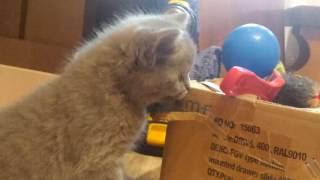 Ксюша с котятами жесть котенок ест коробку кошка кошка и котята