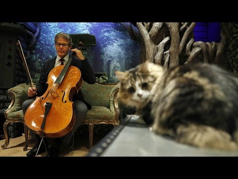 Music for cats tops iTunes Classical Music Chart
