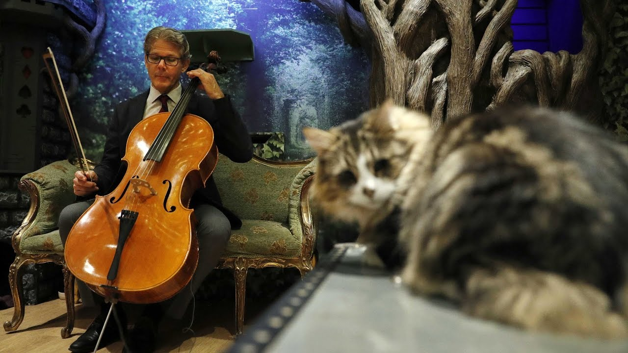 Music For Cats Tops Itunes Classical Music Chart Youtube