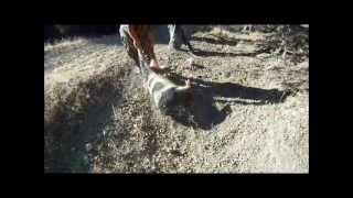 jack ranch pig hunt sept 2012