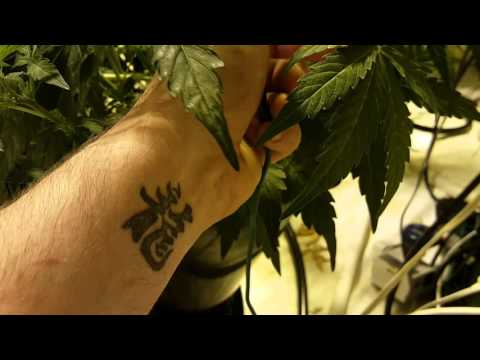 How to get Big yields with autos, lst bowl training