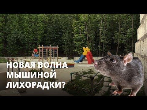 Мышиная лихорадка в Саратове. На Лесной Республике новые случаи заболевания ГЛПС