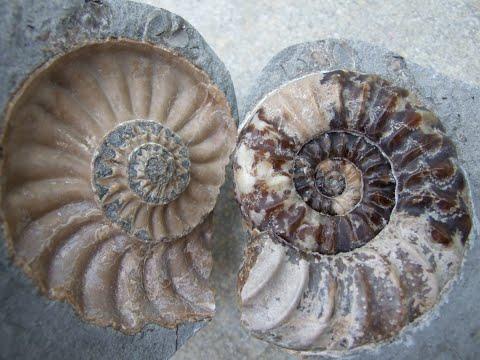 Fossil Hunting On The Jurassic Coast
