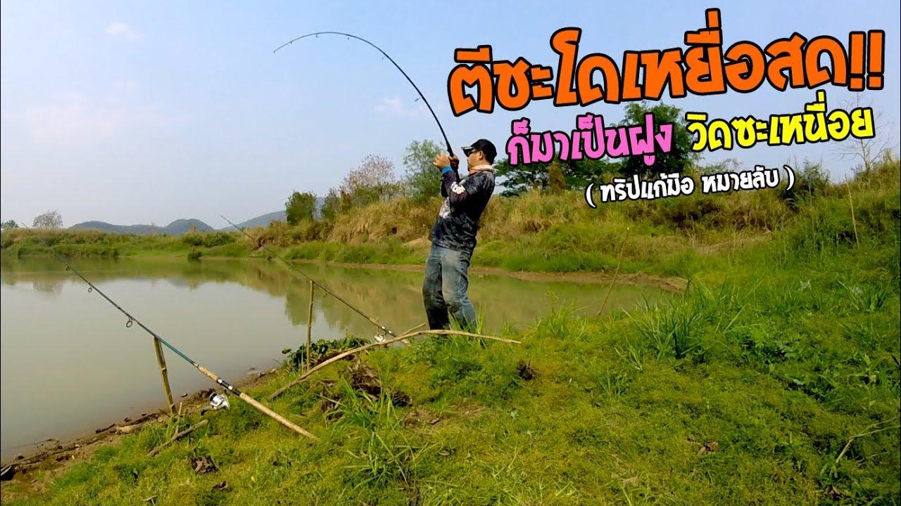ตีชะโดเหยื่อสด หมายนี้มีไซร์โหด!! ตกปลาชะโดหน้าดินแม่น้ำ (มันมาเป็นฝูง วิดซ๊ะเหนื่อย!!)