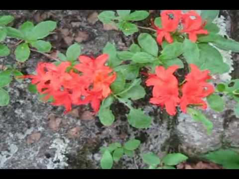 Appalachian Trail - Blood Mountain - Freeman Trail 6-8-10