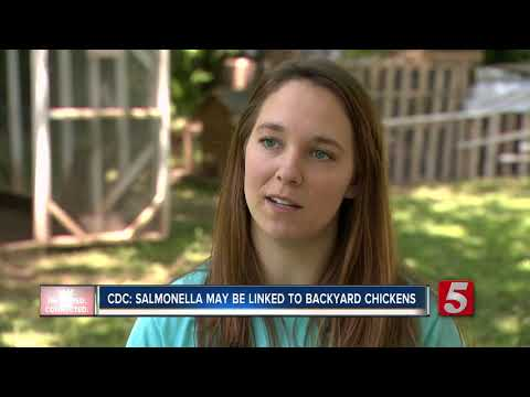 CDC: Backyard chickens likely cause of Salmonella outbreaks