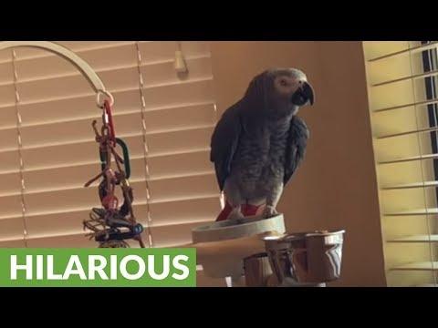 Observant parrot is an excellent watch bird