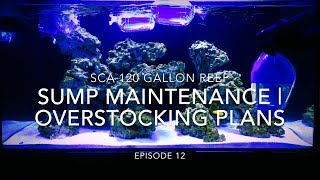 SCA 120 Gallon Reef | Ep.12 | Sump Maintenence & HUGE Overstocking Plans