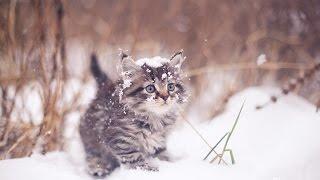 Кот зимой, очень смешной кот